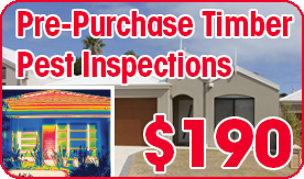 Pre-Purchase Timber Pest Inspections