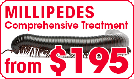 millipede treatment