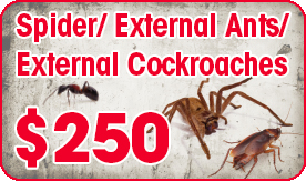 Spider Ex Ant Ex Cockroach