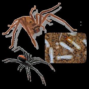spiders_termites